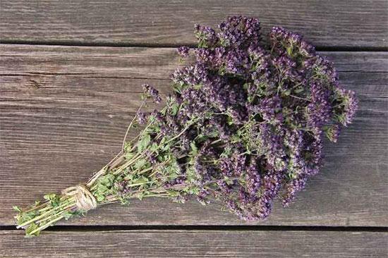 Душица - травы для сна